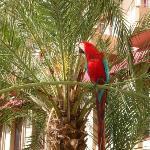 Hotel Parrot