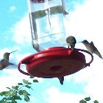 One of many Humming Bird feeders.