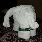 TOWEL ELEPHANT!