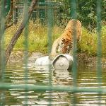 Over A Barrel ! Sandown Zoo IOW
