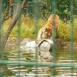 Over A Barrel ! Sandown Zoo IOW