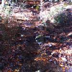 Irati en otoño