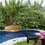 Pool in back