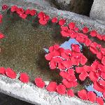 Beautiful Rose Petals in Troughs...everywhere.