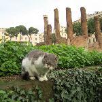 I gatti di Roma/Torre Argentina