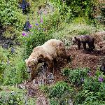 Sow and cub at Frazier Lake