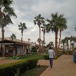 Территория отеля вся зеленая, а вокруг пустыня