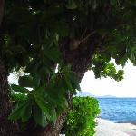 frangipani and sand