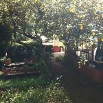 Garden outside study