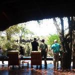 Guests enjoying Elephant