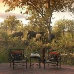 Elephant at Hoyo Hoyo Tsonga Lodge