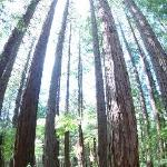 Huge stand of trees