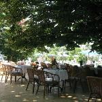 Столики ресторана на улице, под раскидистыми кронами