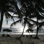 entre palmeras