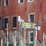 Place to take the gondola