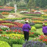 Mae Fah Luang flower garden