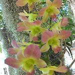 Orchids hanging from trees around pools