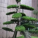 outside topiary