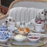 guests enjoying devonshire tea