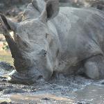 Lazing around in the mud