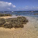 snorkeling close to Bluff