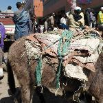 Donkeys in the Mercato - Main market area of Addis Ababa