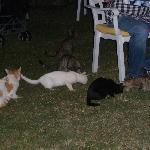 Problematisch - viele Katzen