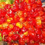 mercato esquilino - peperoncini red habanero