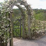 fruit trees carefully trained over the arch