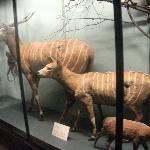 Mammals section