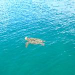 green sea turtle along side the boat.