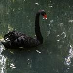 The Black Swan, Burn Bridge, Harrogate.