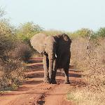Had to put it in reverse when mama elephant headed for us