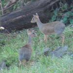 dik diks outside our room