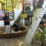 Freddy,our tour guide next to a rolling stone that smashes the tequila plant