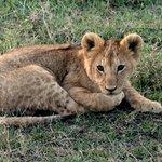 cria de leon
