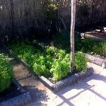 salada direto da horta na hora do pedido