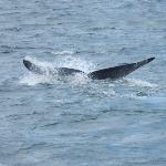 Baleine au large