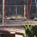 Deer on the playground :)
