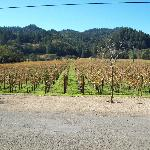 The View of the Vineyard looking back toward the highway