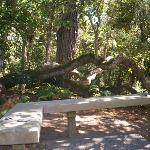 Live Oak Tree and Bench