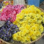 Flowers for Archanai. The purple flowers are a specialty for the offering to Lord Saneeswara.