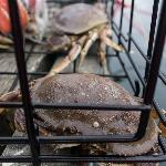 Fresh crab!!!