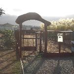 great enclosed exercise & potty area for dogs