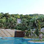 vue de la piscine sur les logements et la jungle