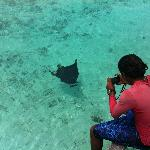 The Eagle Ray, marine life at its best