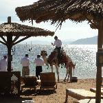 camel came to us on beach- no hasselling to take part