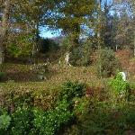 One of the view from our room - to the woods behind The Barn.