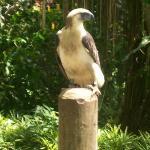 Phil.Eagle