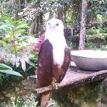 Camera-friendly Brahminy Kite